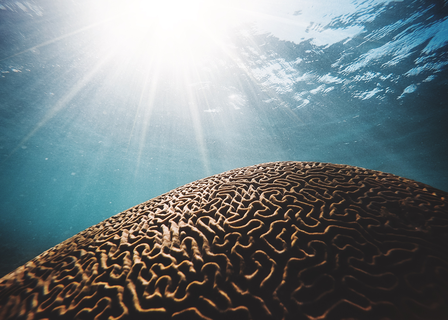 Sun shinging down through water onto brain coral in the ocean
